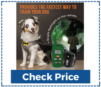Sportdog Training Collar with Remote