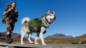 best-hiking-dogs-