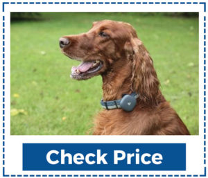 Gps-Pet-Tracker-No-Monthly-Fee