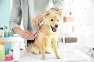 Soft Pet Groomer Brush