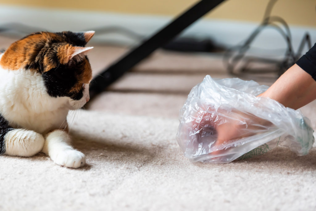How to Stop Cats from Pooping on The Carpet