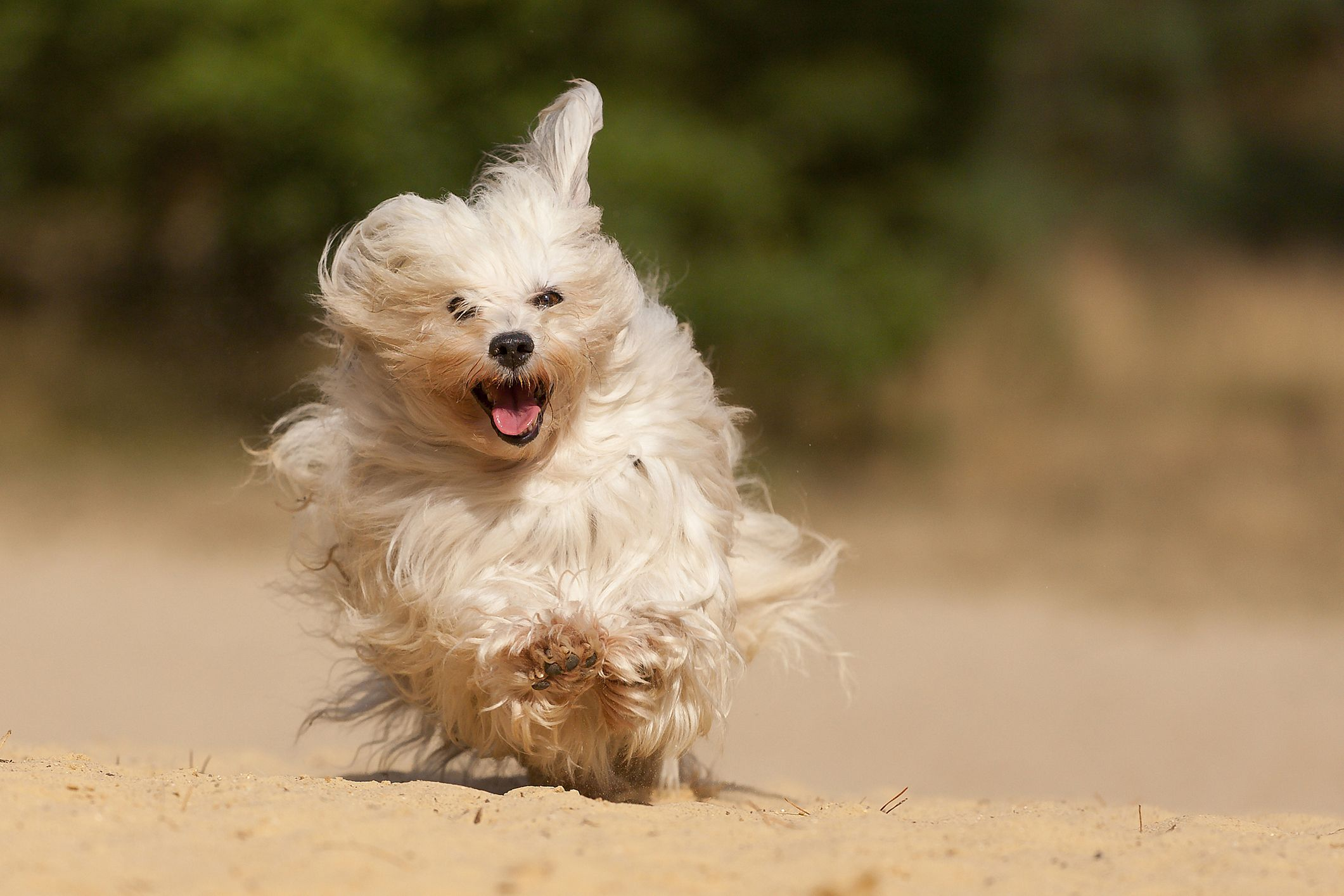 Cutest Small Dog Breeds