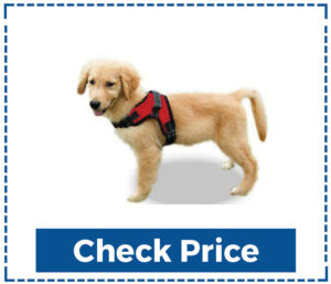 Copatchy No Pull Dog Harness for Hiking