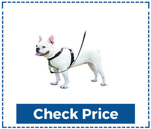 PetSafe 3 in 1 Dog Harness for Small Dogs
