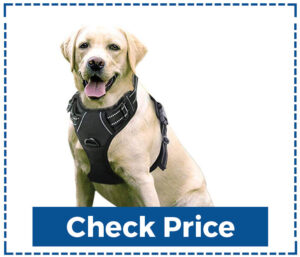 Eavsow Outdoor Dog Harness for Walking