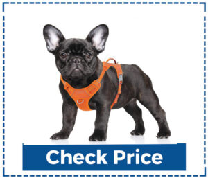 BARKBAY No Pull Dog Harness for Small Dogs