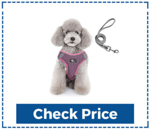 Pawchie Puppy Harness and Leash